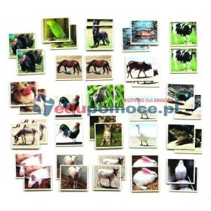 Zwierzęta hodowlane - memo