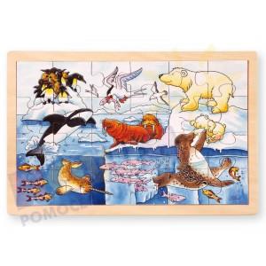 Zwierzęta z Arktyki - puzzle