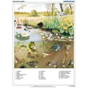 Ekosystem jeziora - tablica ścienna