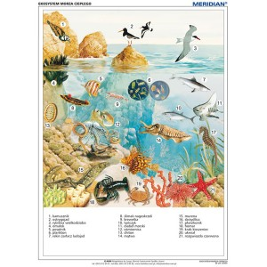 Ekosystem morza ciepłego - tablica ścienna