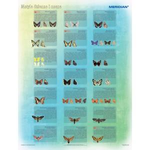 Motyle dzienne i nocne - tablica ścienna