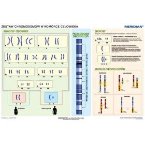 Podstawy genetyki - chromosomy w komórce człowieka - tablica ścienna