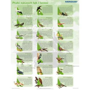 Ptaki naszych łąk i lasów - tablica ścienna