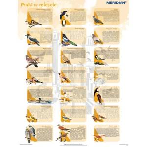 Ptaki w mieście - tablica ścienna