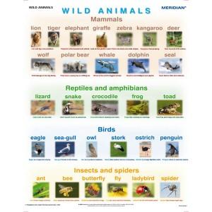 Wild animals - tablica ścienna