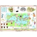 La Grecia Antigua - Cultura