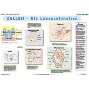 Zellen - die Lebensseinheiten - tablica ścienna