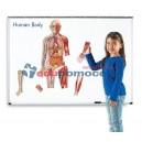 Ciało człowieka - magnetyczny zestaw demonstracyjny